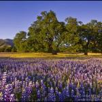 Help, Seasonal Allergies Are Killing Us!