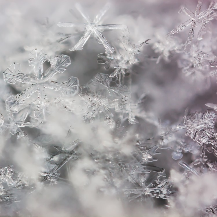 a handful of real macro snowflakes | photo cred:  Yantra