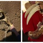 San Diego Zoo's Elephant Odyssey Proves to be Sticky